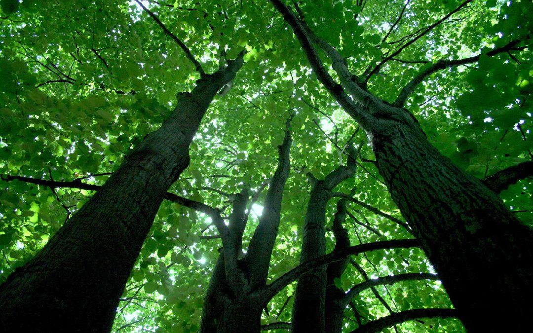 Mатеријал за припрему стручног испита за стицање лиценце за обављање стручних послова у газдовању шумама