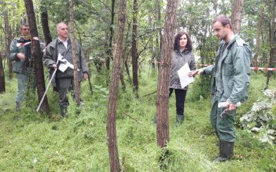 Организовано полагање стручног испита у шумским газдинствима Сомбор, Северни Кучај и Нови Сад